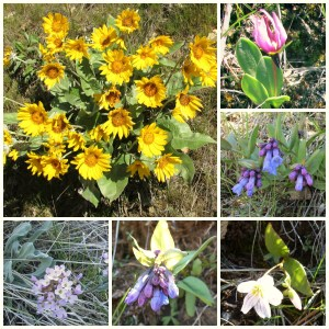 Wildflowers of Swakane Canyon