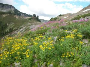(pic by Kent Doughty) Wildflowers along the Ptarmigan Ridge Trail