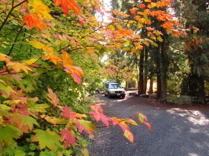 Fall colors at our camp